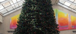Christmas tree featured image