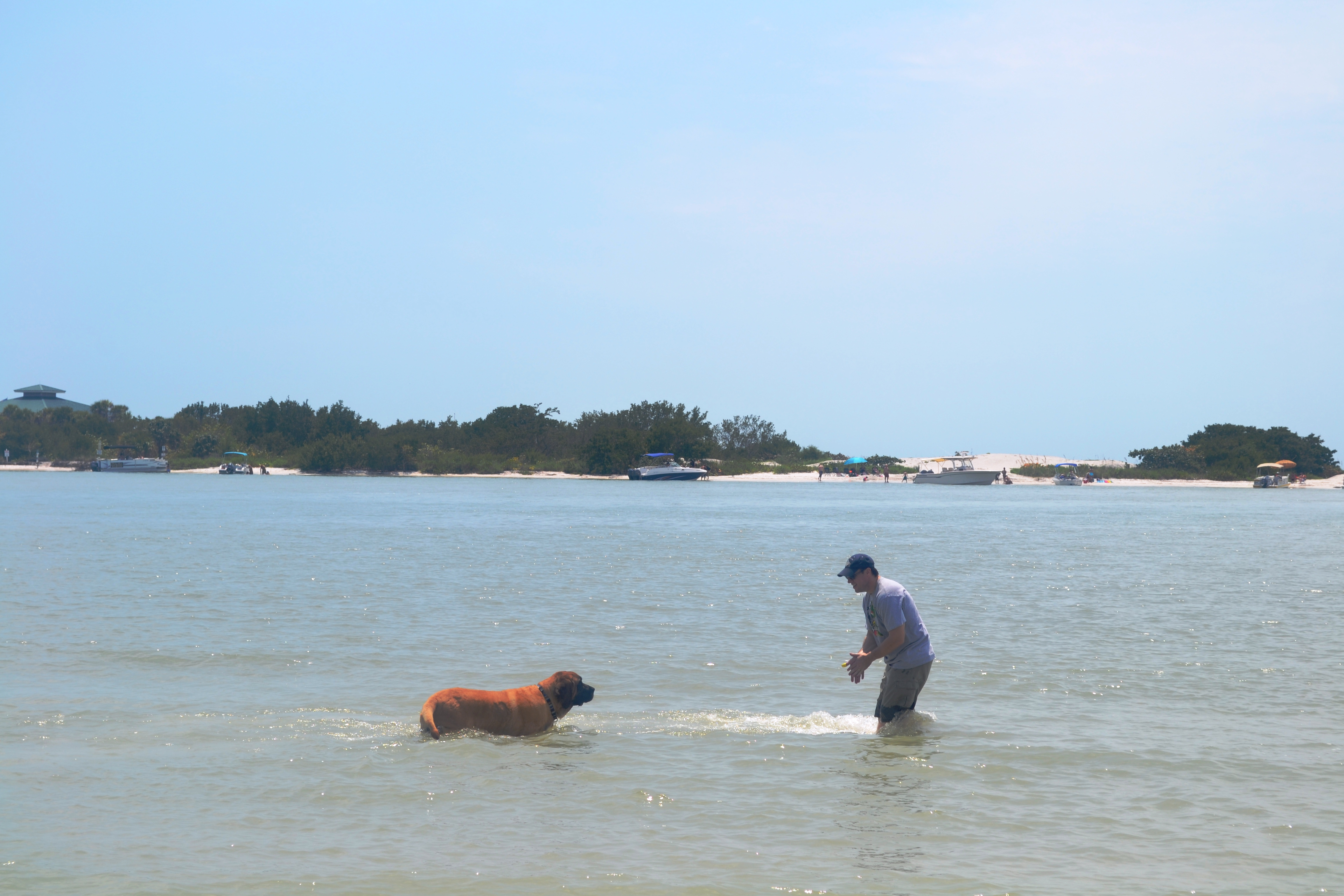 Buddy swim