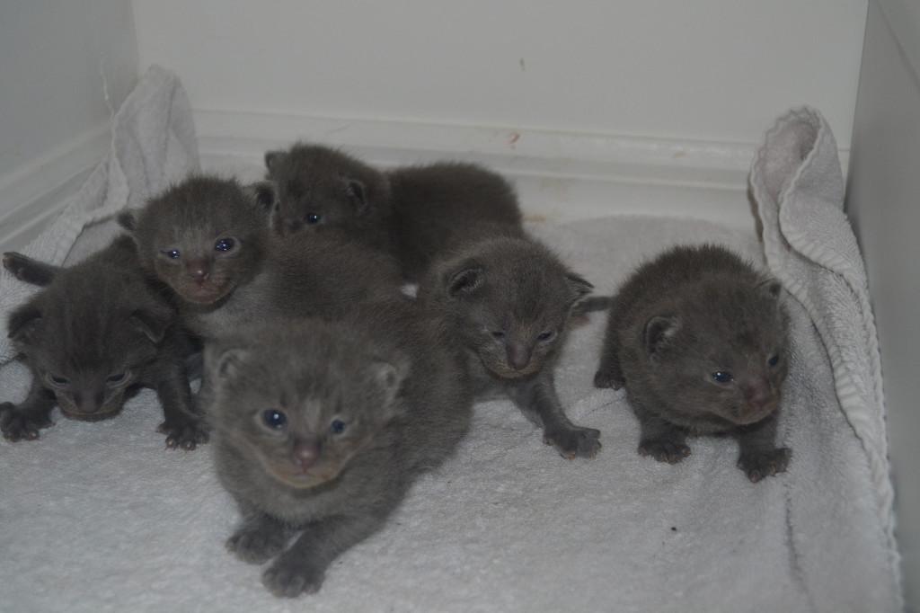 kittens 2 weeks old
