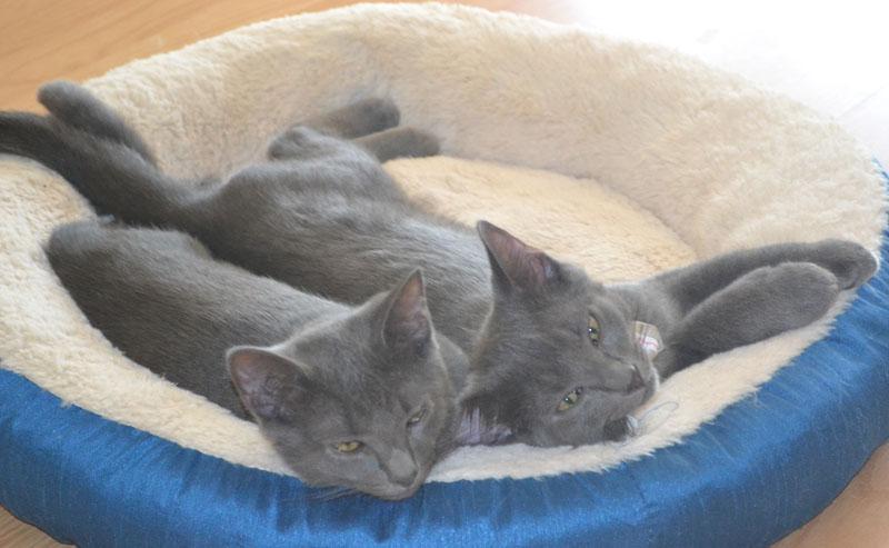 resized image cats