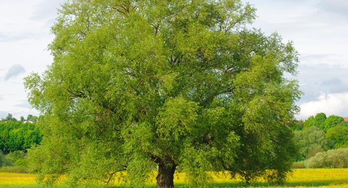 resized-tree-photo