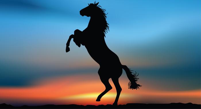 horse cavalry blog
